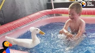 Boy And His Duck Best Friends Have So Much Fun Together   The Dodo