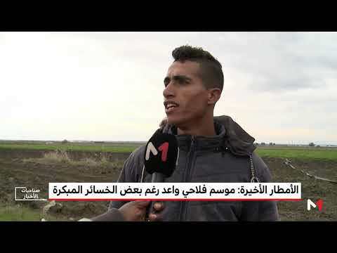 العرب اليوم - شاهد: توقعات بموسم فلاحي واعد على الرغم من الخسائر المبكرة