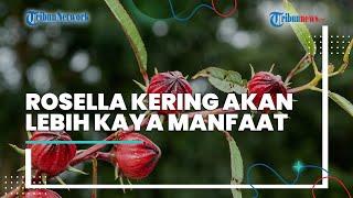 Tips Mengolah Bunga Rosella untuk Mendapatkan Senyawa Antioksidan yang Tinggi