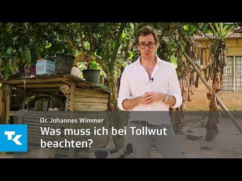 Die Behandlung der Würmer vom Rizinusöl und dem Kognak die Rezensionen