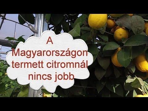 hogyan lehet megszabadulni a parazitáktól a citromon