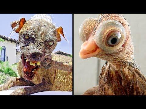 Mascotas Aterradoras Creadas Por Humanos