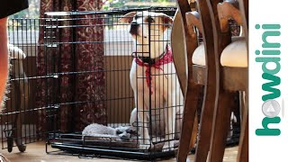 How To Crate Train a Puppy - Crate Training a Pupp...