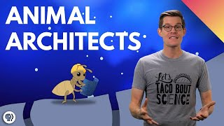 Sharing this excellent video on animal architects Interested in the greatest architects