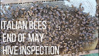 EP-5 ITALIAN BEES HIVE INSPECTION END OF MAY 2020