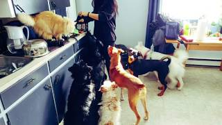 Managing Multiple Dogs inside your home during Quarantine....