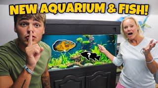 SURPRISING My MOM with *NEW* PREDATORY FISH & AQUARIUM!!