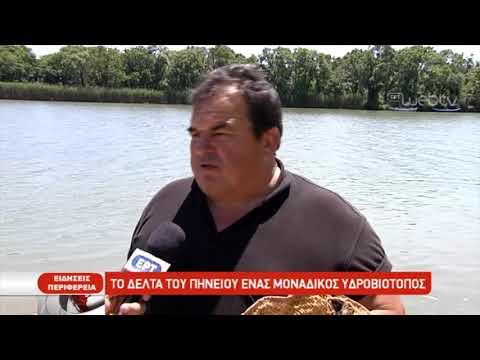 Το δέλτα του Πηνειού ένας μοναδικός υδροβιότοπος | 29/5/2019 | ΕΡΤ