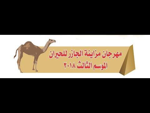 مهرجان مزاينة الجازر للحيران الموسم الثالث 2018 م
