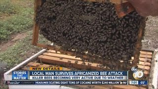 Local man survives Africanized bee attack