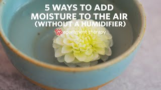How to Add Moisture to Dry Air (Without a Humidifier) | Apartment Therapy