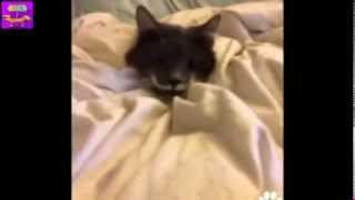 Приколы! Ржачная подборка домашних животных! Февраль 2014 ! Часть 3 Funny Cats Compilation