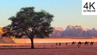 4K Wadi Rum - Jordan