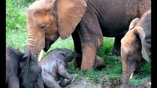 Herd to the rescue! Africa Watering Hole cam. 10 November 2019