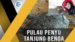 Pulau Penyu Tanjung Benoa - Surga Para Penyu