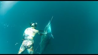 Spearfishing my 138kg Black Marlin off Brisbane while looking for Mackerel