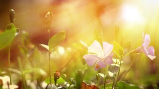 """Peaceful Music, Relaxing Music, Instrumental Music, """"Wind Song"""" by Tim Janis"""