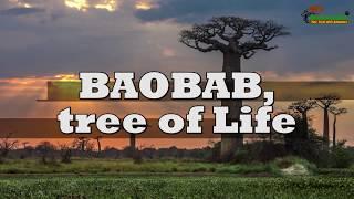 BAOBAB, the tree of LIFE | Great Migration | Savana Safari