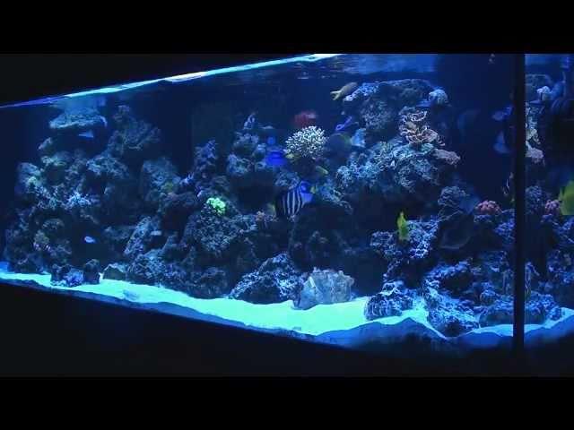 300 Gallon Reef Tank Update!