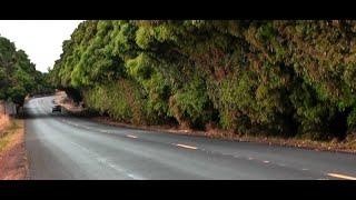 Mangueiras às margens das rodovias podem estar com dias contados por causa do fogo.