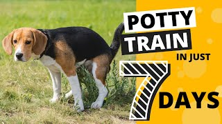 How to Potty Train your Beagle in 7 Days