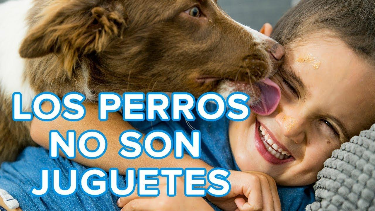 Los perros no son juguetes ni un regalo para los niños