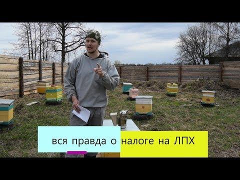 вся правда о налоге на ЛПХ пчеловодство (ВИДЕО)