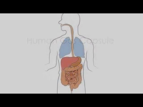 Dieta pentru detox colon