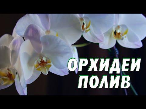 Как поливать орхидею зимой в домашних условиях. #орхидеиполив