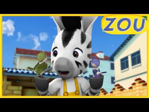 Zou en français 🐦 Zou et l'oisillon 🐣 Dessins animés