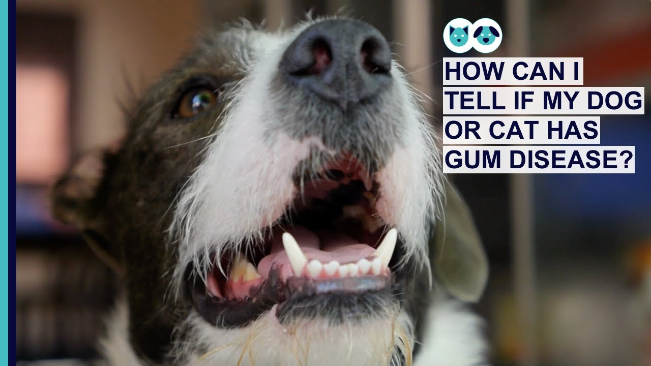 How to Tell If Your Dog or Cat Has Gum Disease