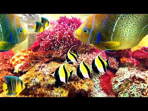 Bể Cá Thủy Sinh nước mặn ở nhà hàng hải sản tại Đà Nẵng siêu đẹp