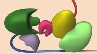 RNA - Splicing