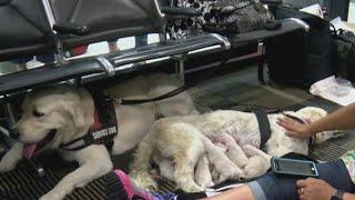 Puppies born at airport