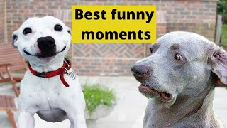 (AWESOME) Cute Pets and Animal Compilation #3- Funny Pets