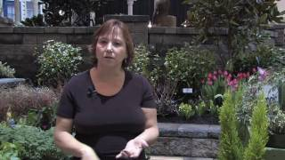 Garden & Plant Care : Best Time To Plant Vegetable Gardens