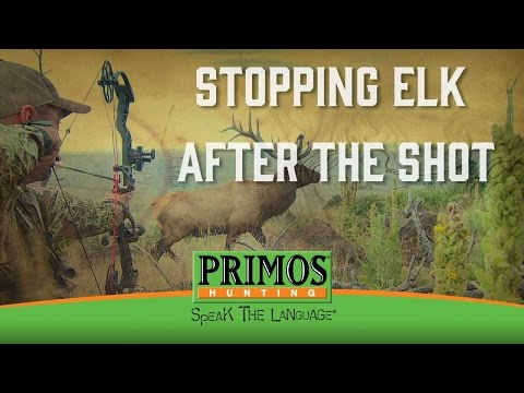 How to Stop an Elk from Running After the Shot video thumbnail