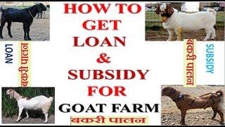 Goat farm    Profitable Agri Business     How to get loan for Goat farm