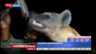 Rare Hyenas feeding spectacle- Hyena whispers