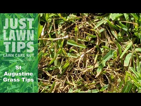 St Augustine Grass Tips For Winter