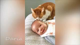 Смешные дети и животные