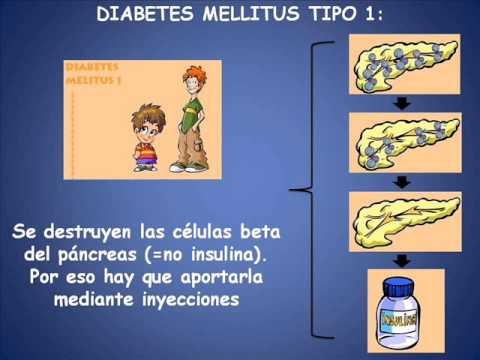 Liberación de azúcar y la insulina