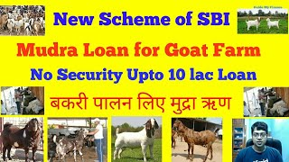 How to Get 10 Lacs Security free loan for Goat Farm   SBI Mudra Allied Agri  For Goat Farm