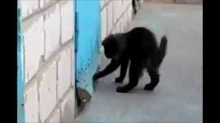 Отважный кот спасает друга.)))