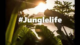 Nyk nyk - #Jungle life