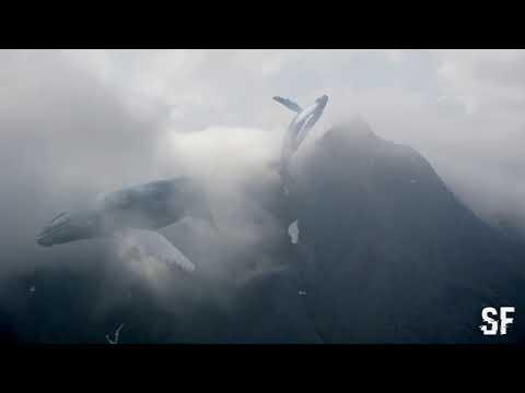 Синий кит - 4:20 (Music)