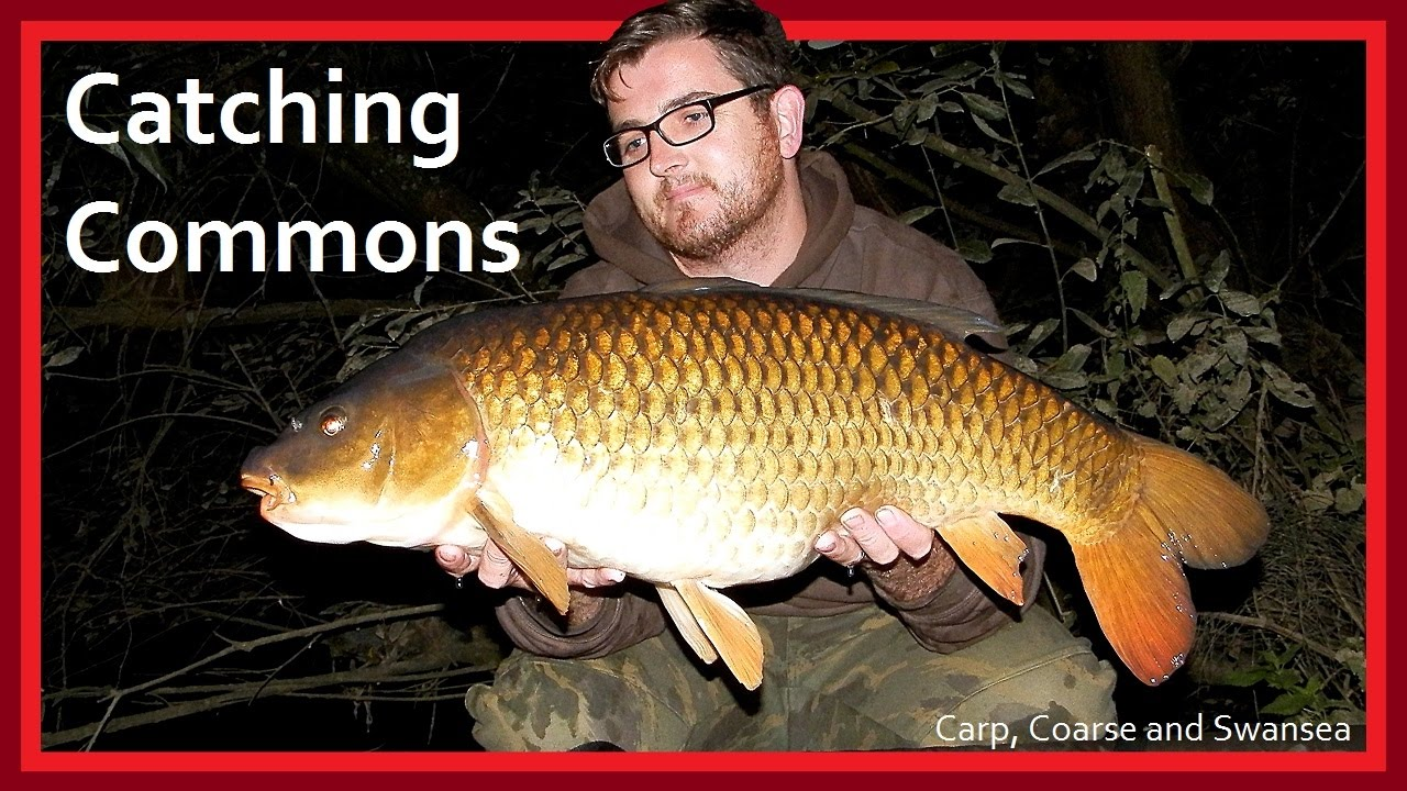 Catching Commons on the Fendrod. Carp, Coarse and Swansea Video 143