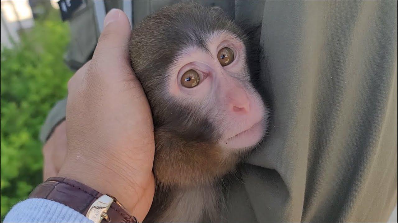 자기가 사람인줄 아네요..아기원숭이 납치할뻔 했습니다.