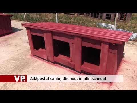 Adăpostul canin, din nou, în plin scandal