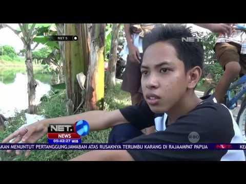 Penampakan Buaya di Kanal Batua Jadi Tontonan Warga - NET5